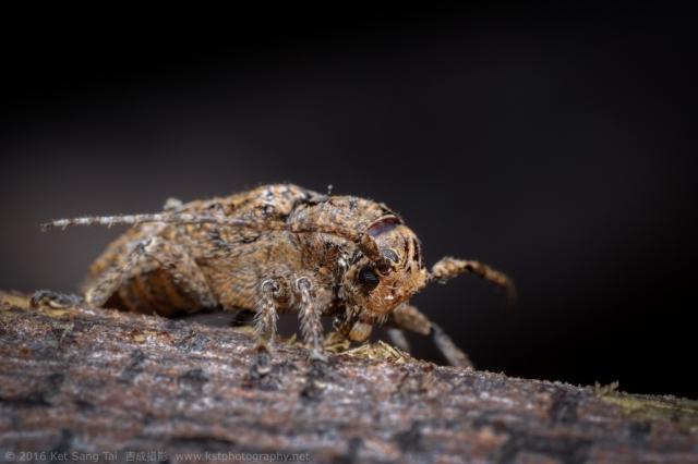 macro-insect_2016-07-28_21-19-06_0102_©KetSangTai2016